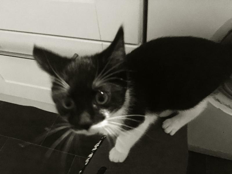 Fidel kitten